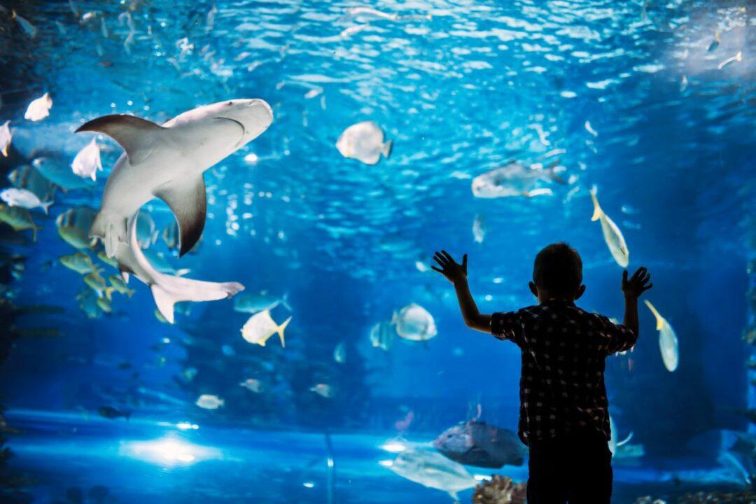 Shark City Sinsheim