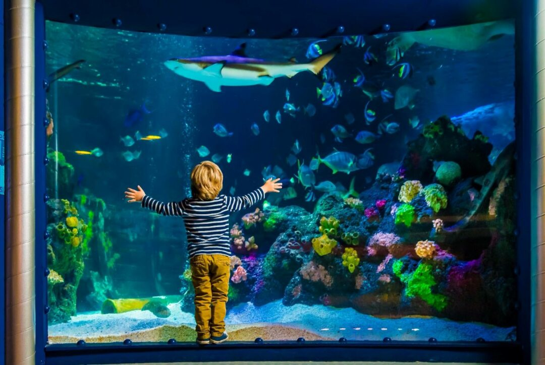 Sea Life Centre (international)